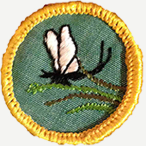 scout badges2